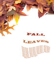 Fall leaves on white background with copyspace or room space for your words or text vertical of across the top and left side area Stock Photos