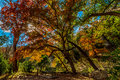 Fall at lost maples state park texas beautiful foliage of Stock Images