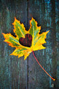 Fall in love photo metaphor colorful maple leaf with heart shaped hole lays on dark wooden table Stock Images