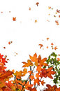 Fall maple leaves background Stock Photos