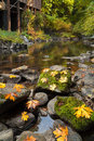 Fall Maple Leaves at Cedar Creek Grist Mill Royalty Free Stock Photo