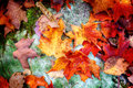 Fall maple leaves on forest floor nature background or autumn Stock Photo