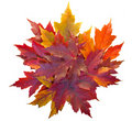 Fall Maple Leaves Pile Isolated Stock Photo