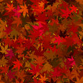 Fall Maple Leaves Seamless Background Royalty Free Stock Images