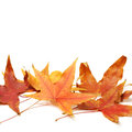 Fall maple leaves on white background Stock Image
