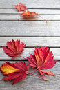 Fall Maple Leaves on Wooden Bench Royalty Free Stock Photos