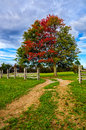 Fall maple and split rail fence, Cumberland Gap National Park Royalty Free Stock Photo