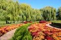 Fall mums at Chicago Botanic Garden