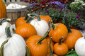 Fall mums with white and orange pumkins colors of pumpkins multi colored in bushel baskets Stock Images