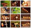 Fall mushrooms in a set of different images Stock Photography