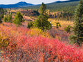 Fall in northern wilderness, Yukon T, Canada Royalty Free Stock Photography