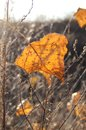 Fall orange poplar leaf on the background of dry grass. Autumn backdrop Royalty Free Stock Photo