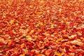 Fall Orange And Red Autumn Lea...
