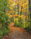 A Fall Path Stock Image