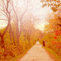 Fall path in the forest preserve Stock Images