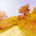 Fall path in the forest preserve Stock Image