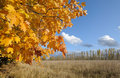 Fall postcard. Red - yellow maple leaves Royalty Free Stock Photos