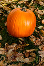 Fall pumpkin background Stock Photography