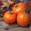Fall Pumpkin still life with the small gourds in rustic scene with barn wood and colorful fall leaves.  It`s a closeup with squar Royalty Free Stock Photo