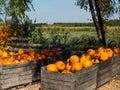 Fall pumpkins Royalty Free Stock Image