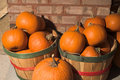 Fall pumpkins Stock Photo