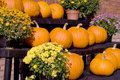 Fall Pumpkins and Flowers Royalty Free Stock Images
