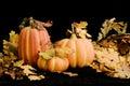 Fall Pumpkins & Leaves-horozontal Royalty Free Stock Photo