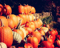 Fall pumpkins for sale is in the air when you see rows of Stock Photography