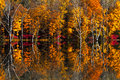 Fall reflections photo the dead forest in Royalty Free Stock Photo