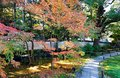 Fall scenery of a beautiful corner in a Japanese garden with colorful foliage of fiery maple trees by a paved footpath Royalty Free Stock Photo