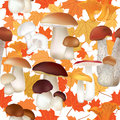 Fall seamless pattern mushroom isolated on white background autumn texture with and maple leaves mushrooms repeating Royalty Free Stock Images