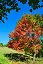 Fall season colors Stock Image