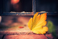 Fall season leaf colorful autumn at urban ground Stock Photo