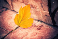 Fall season leaf colorful autumn at urban ground Royalty Free Stock Photography
