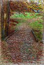 Red leaves cover the small wooden bridge that borders the mountain forest