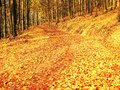 Fall season. Sun through trees on path in golden forest Royalty Free Stock Photo