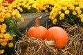 Fall Still Life Royalty Free Stock Photo
