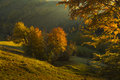 Fall on top of the mountains colors in forest during sunrise Stock Images