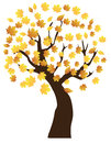 Fall tree with leaves Royalty Free Stock Photo