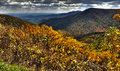 Fall Trees In The Blue Ridge Mountains. Royalty Free Stock Photo