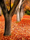 Fall trees landscape several in autumn with orange and red leaves Royalty Free Stock Images