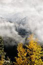 Fall trees on a mountain top snowy cloudy Stock Photo