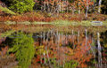 Fall trees reflected in water changing colors the Royalty Free Stock Photography