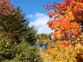 Fall Trees and Sky Stock Image