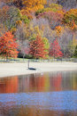 Fall trees by water Stock Photo