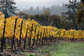 Fall Vineyard Royalty Free Stock Photography