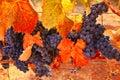 Fall Wine Bounty Royalty Free Stock Photo