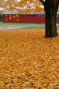 Fall: yellow maple leaf carpet Stock Photos