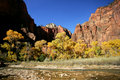 Fall in Zion Stock Photo