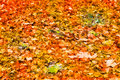 Falled Yellow red green leaves on the ground Royalty Free Stock Photo